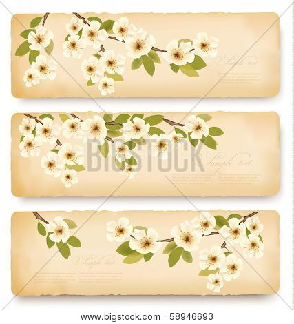 Three retro spring banners with blossoming tree brunch with spring flowers. Vector illustration