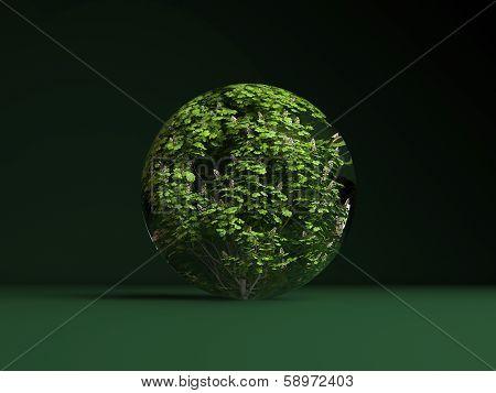 Aesculus Hippocastanum Sphere Spring