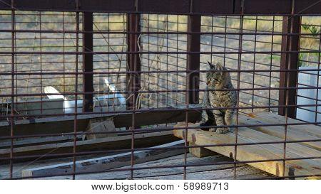 Kitten in jail