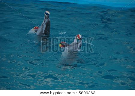 Delphine mit Kugeln