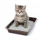 stock photo of cleanliness  - kitten or little cat in toilet tray box with litter - JPG
