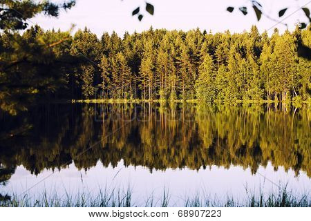 forrest lake with reflection