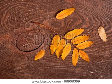Rowanberry Leaves