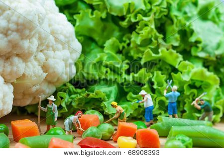 Group Of Farmers Harvesting A Vegetables.