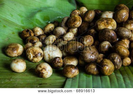 Astraeus Hygrometricus, Black Barometer Earthstars Mushrooms