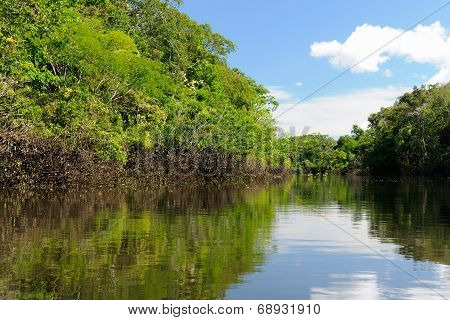 Amazon River Landscape In Colombia