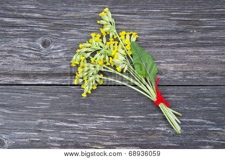 Common Cowslip Primrosa( Primula Veris) Medical Flowers Bunch
