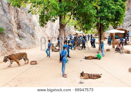 Tourists posing with tigers at the Tiger Temple in Kanchanaburi, Thailand.