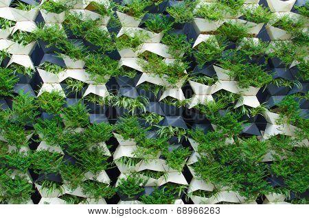 Green Plants Wall