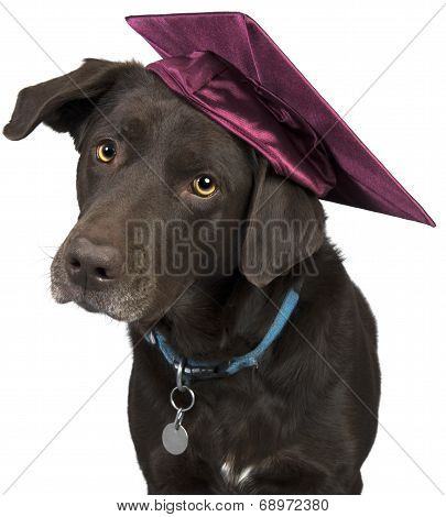 Dog With Mortarboard
