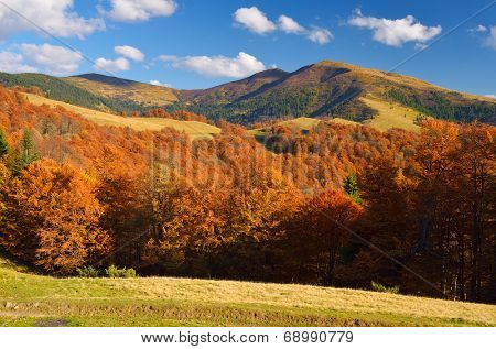 Mountain landscape with autumn forest in the mountains. Sunny Day