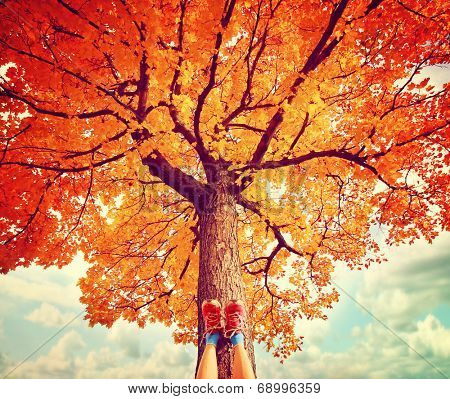 feet resting on a tree trunk during fall when the leaves are turning colors toned with a retro vintage instagram filter