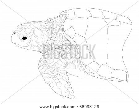 Beach Collection Sea Turtle