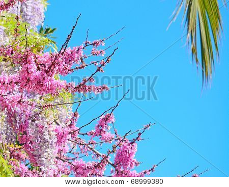 Palm And Wisteria