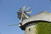 foto of english ivy  - The windmill Seelenfeld  - JPG