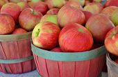 foto of wooden basket  - Ripe apples in wooden bushel baskets at the market.