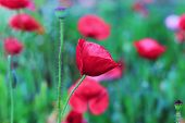 picture of opium  - Red opium in the natural blur background vintage - JPG