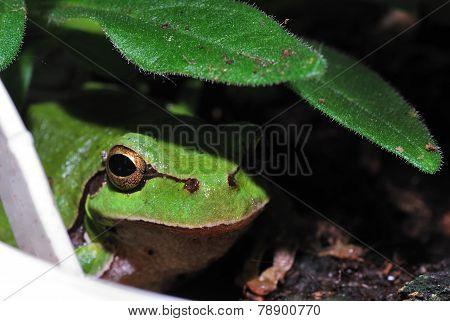 green tree frog camera