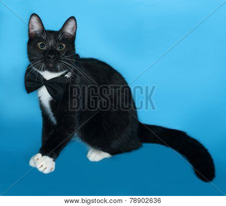Black And White Cat In Bow Tie Sitting On Blue
