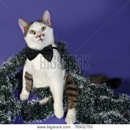 White And Tabby Cat In Bow Tie And Christmas Tinsel Sitting On Blue