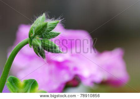 closed flower