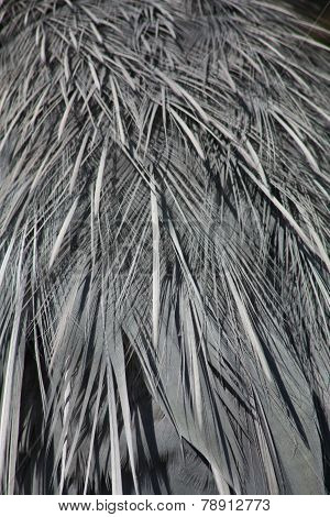 egret feathers