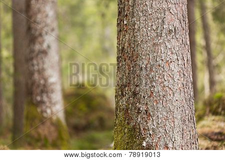 Bark of trees with moss, Berchtesgaden, Germany
