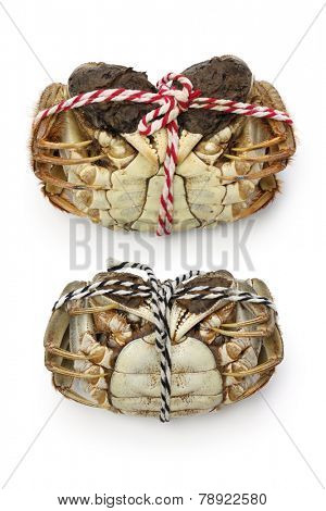 raw shanghai hairy crabs(male and female) ,ventral side