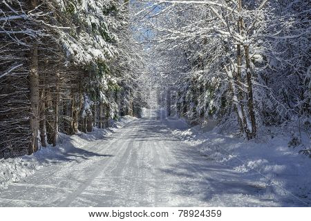 Beautiful country road in the wintertime