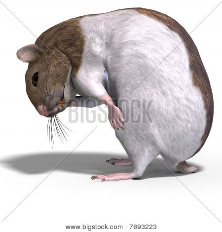 3D rendering of a sweet hamster with clipping pat