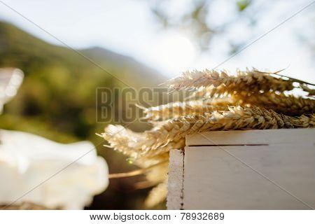 Wheat On The White Wood Box