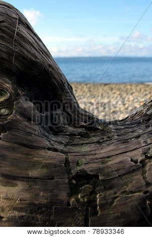 Beach Framed By An Arched Piece Of Driftwood