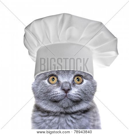 cute cat in a chef's hat  isolated on a white background