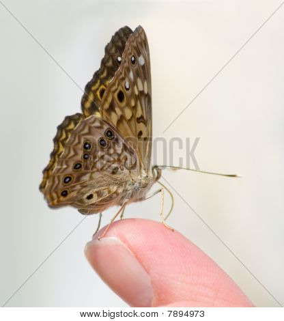 Mariposa en dedo