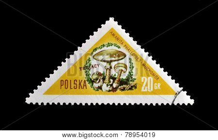 Death cap stamp 1959