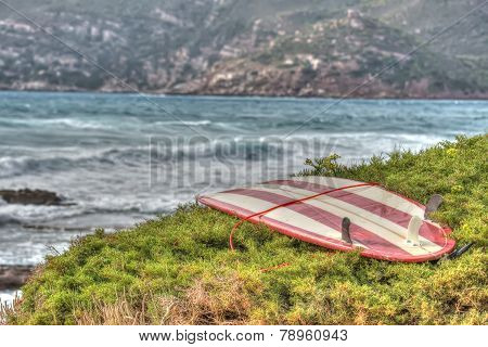 Vintage Surfboard On A Green Bush By The Shore