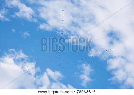 Flock Of Birds Flying In V-shape Formation