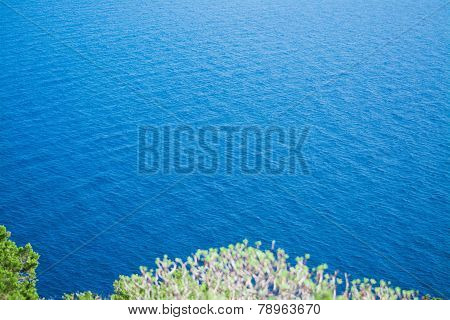 Green Plants Over The Sea