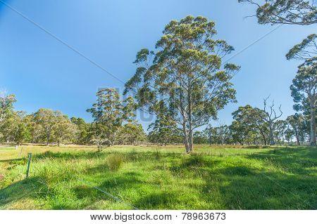 Verdant Pastures