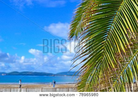 Palm Branch By The Sea