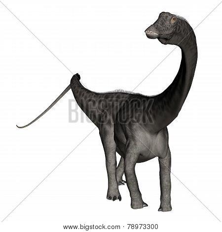 Diplodocus dinosaur standing - 3D render