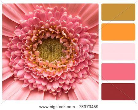 Colour Palette Swatch.