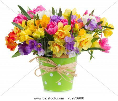 freesia and daffodil  flowers