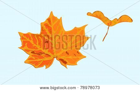 set 2 objects of a maple tree leave