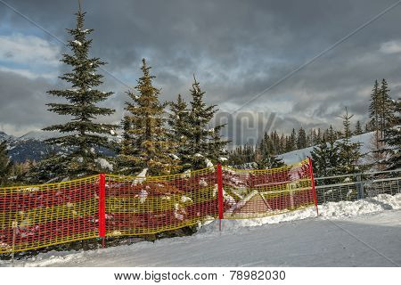 Ski-track In Mountain Forest