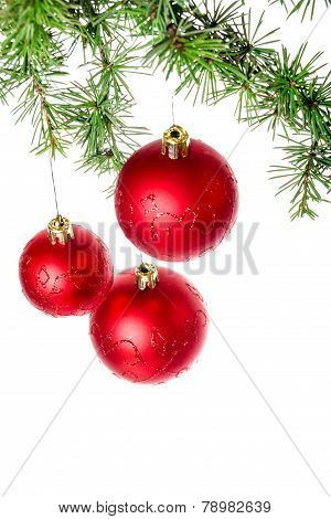 Christmas Decoration With Green Pine Or Fir And Red Roud Ball Ornaments For Christmas