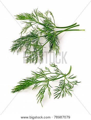 Dill Stems