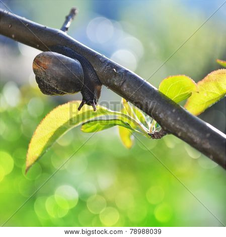 Snail Crowling On Tree's Branch