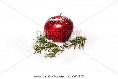 Red apple with fir branches in snow