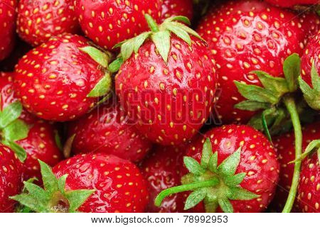 Lot of red ripe strawberries